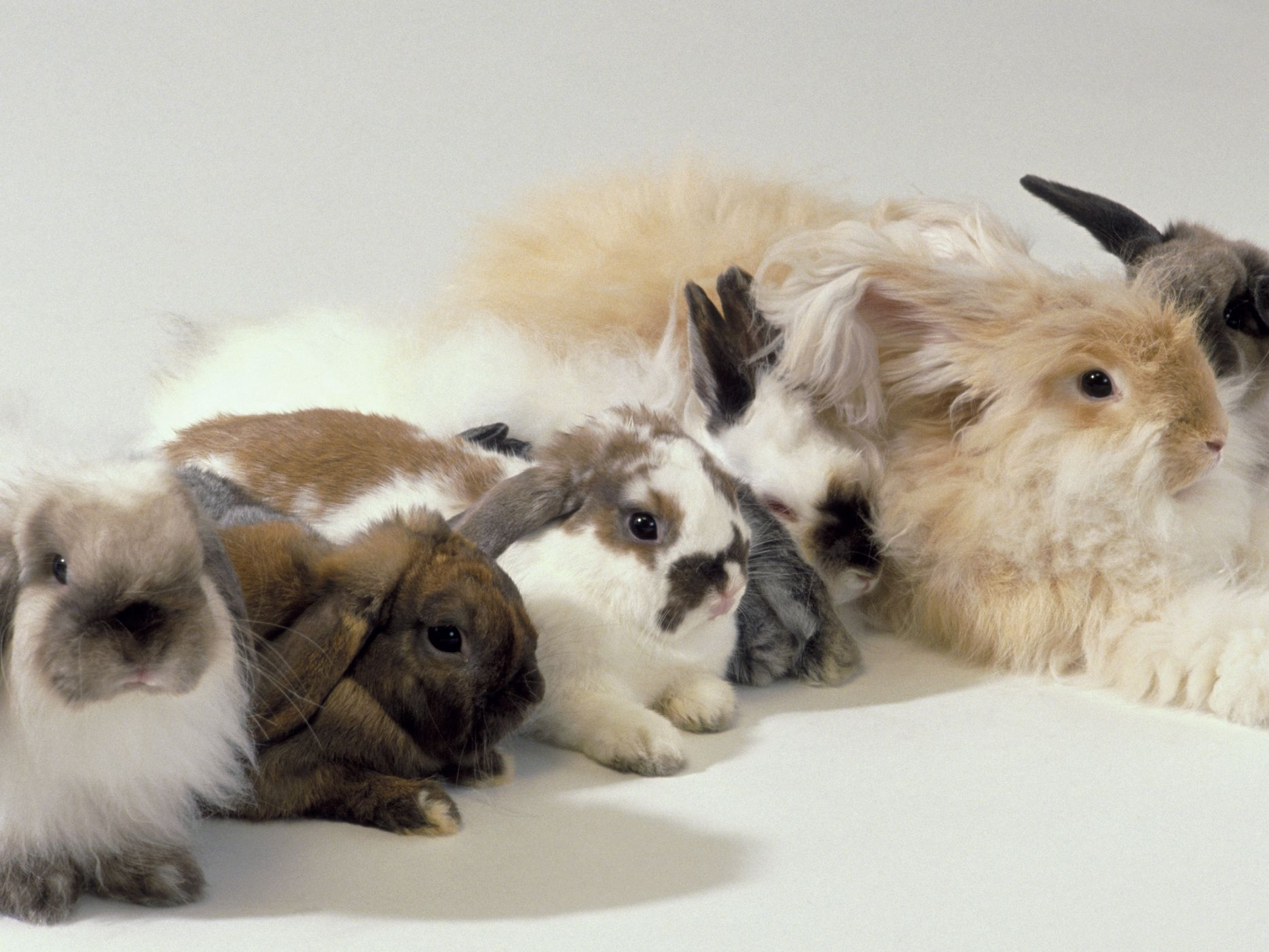 An Overview Of Rabbit Fur Colors And Patterns