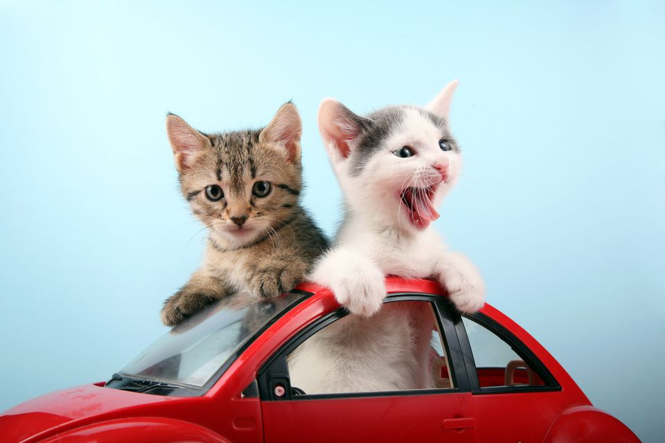 Kittens in a toy car