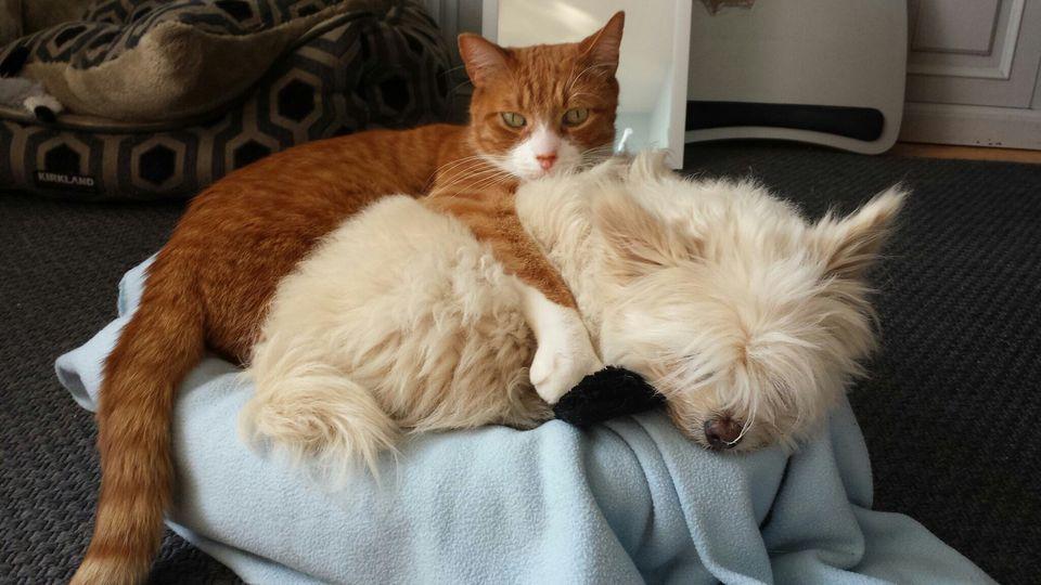 Photo of Cat and Dog Buddies
