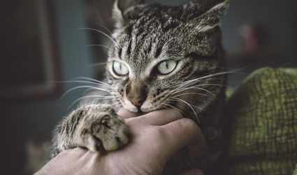 Cats can have aggression problems and bite and scratch their owners