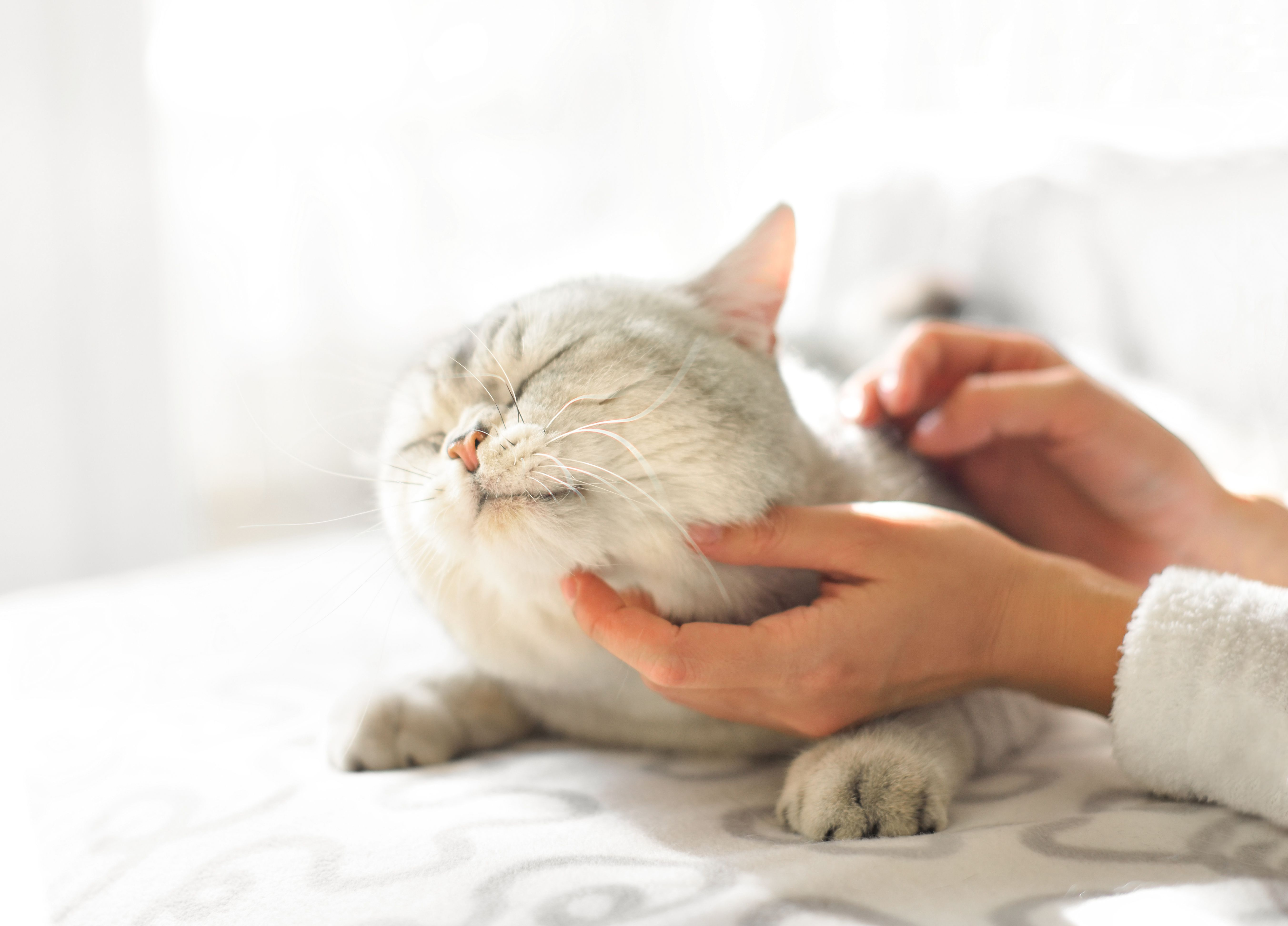 Medications to treat cat seizures and cat epilepsy for Can fish have seizures