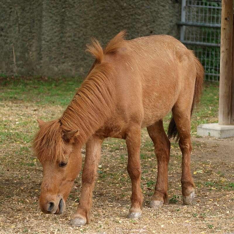 Noma horse