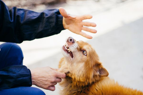 Dog growling at a person's hands.