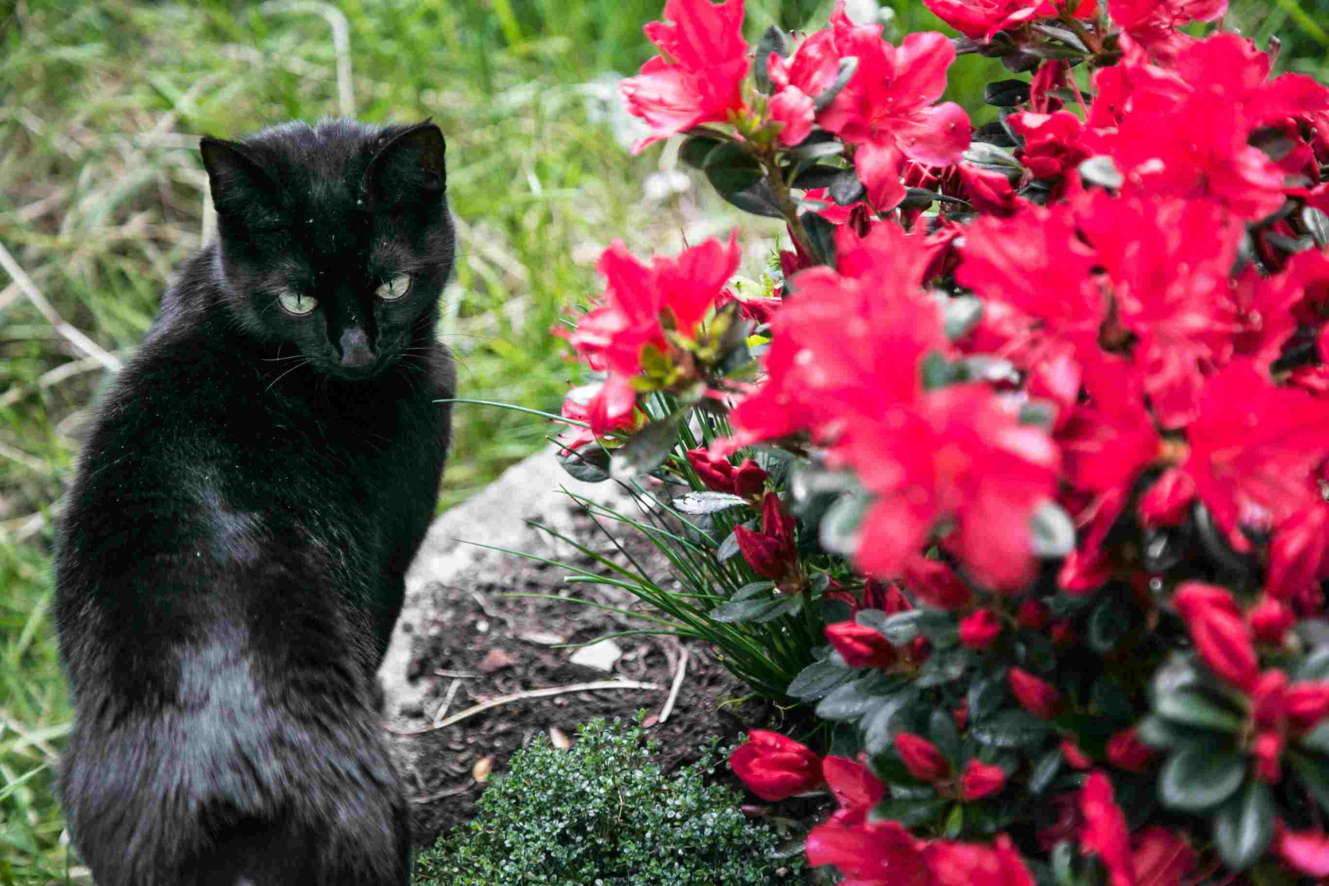 Close-Up Of Black Cat In Garden
