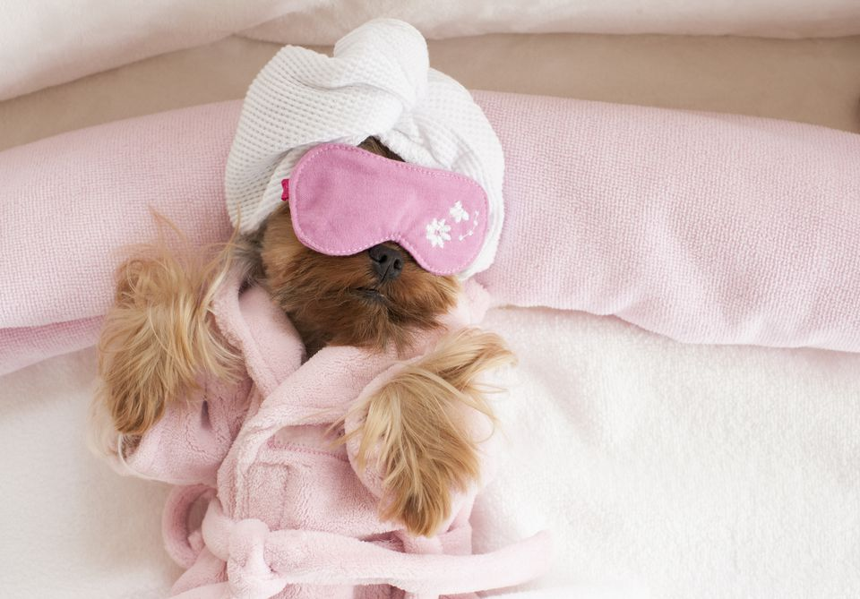 A dog wear a robe, sleep mask and towel on its head.