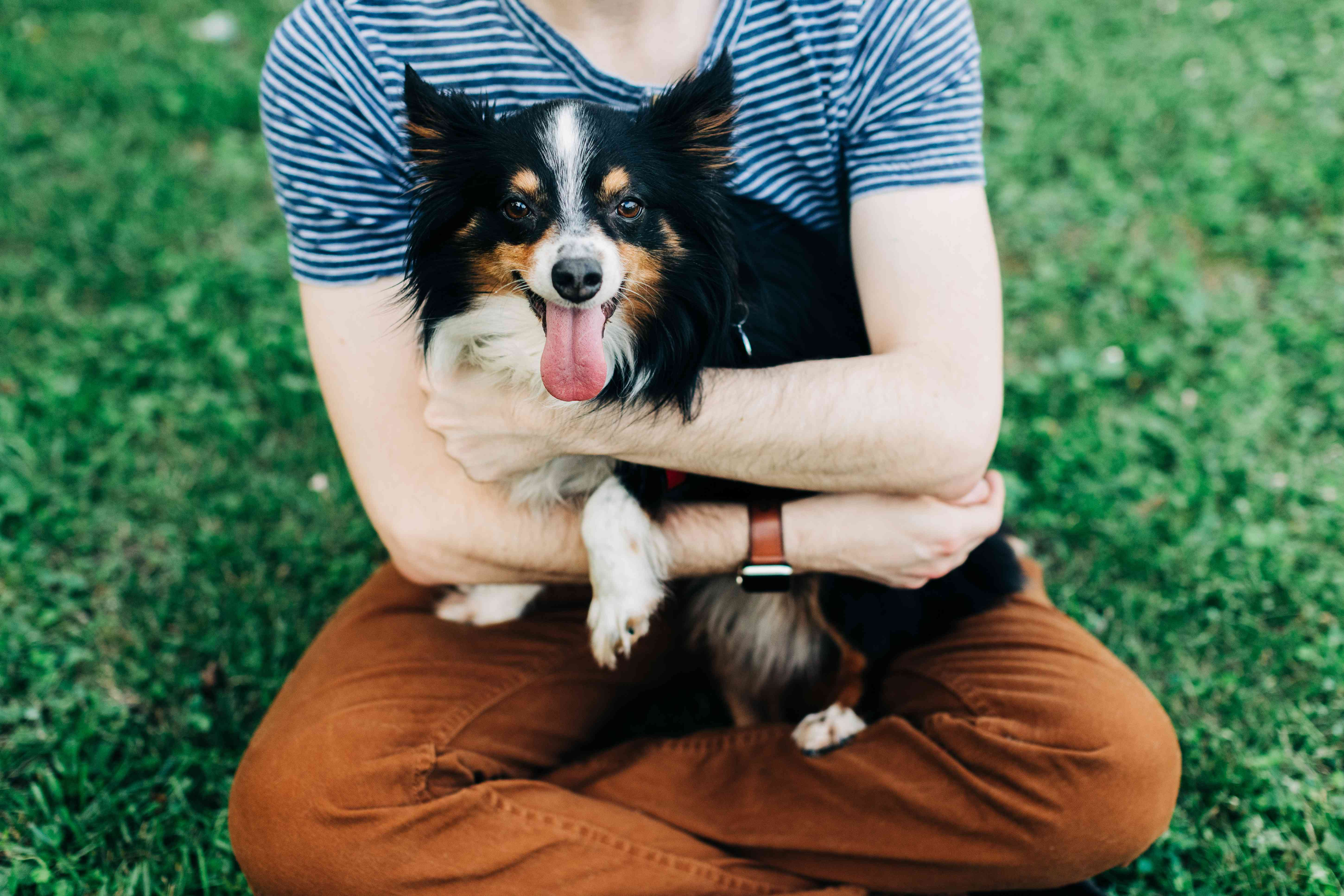 Black and white dog being held by owner