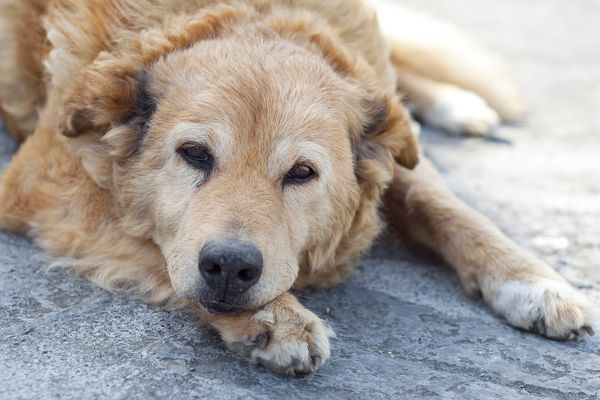 Dog resting on floor