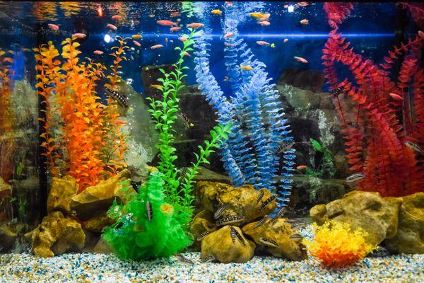 Wall mounted aquarium with tropical fish