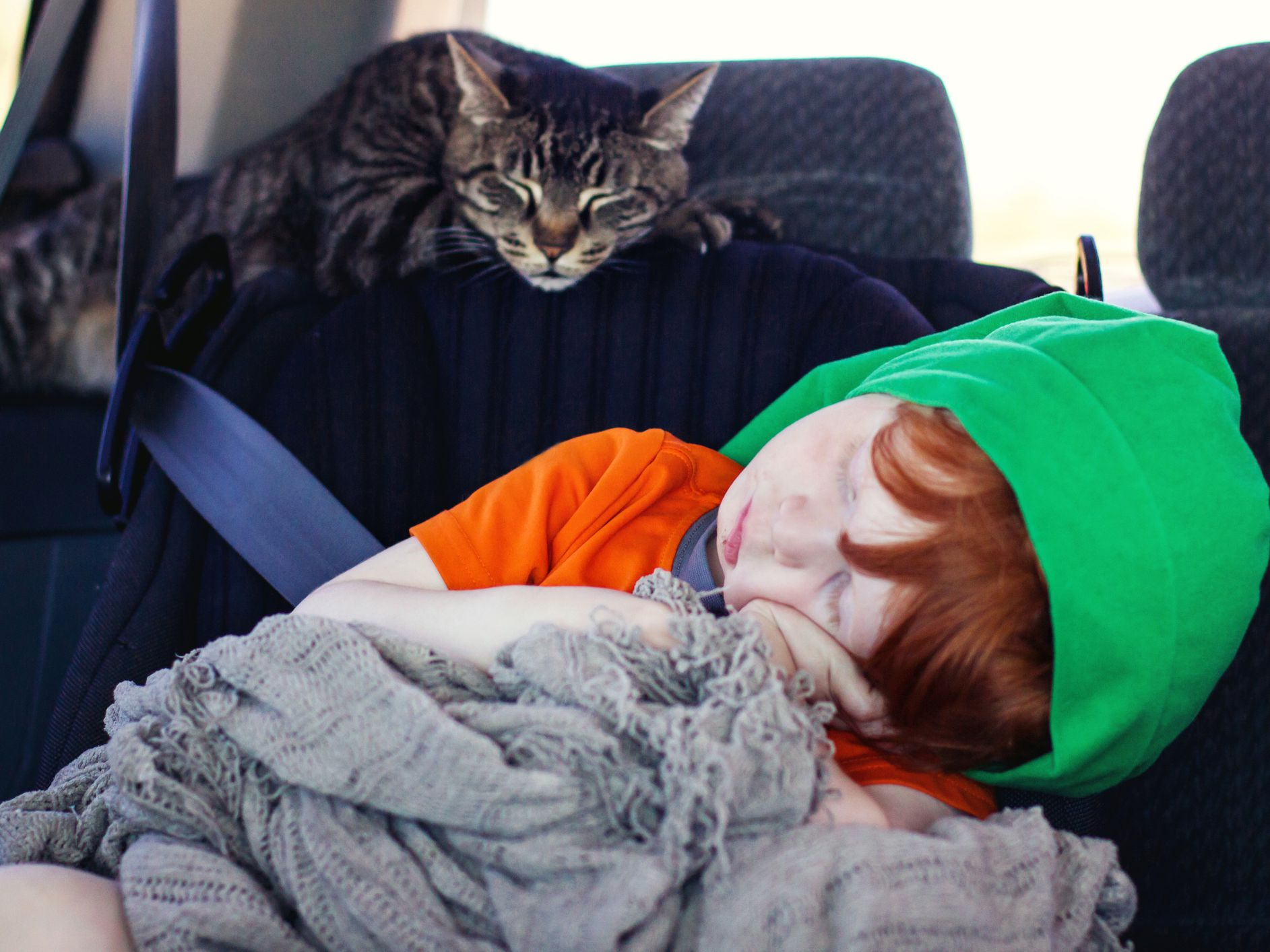 8 Tips to Help Cats Enjoy Car Travel