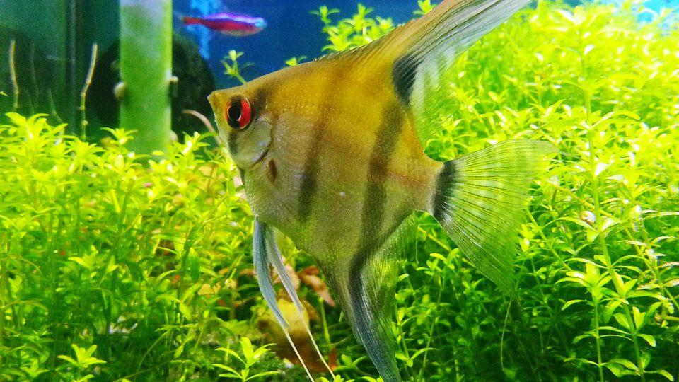 Peces de acuario que nadan con plantas verdes