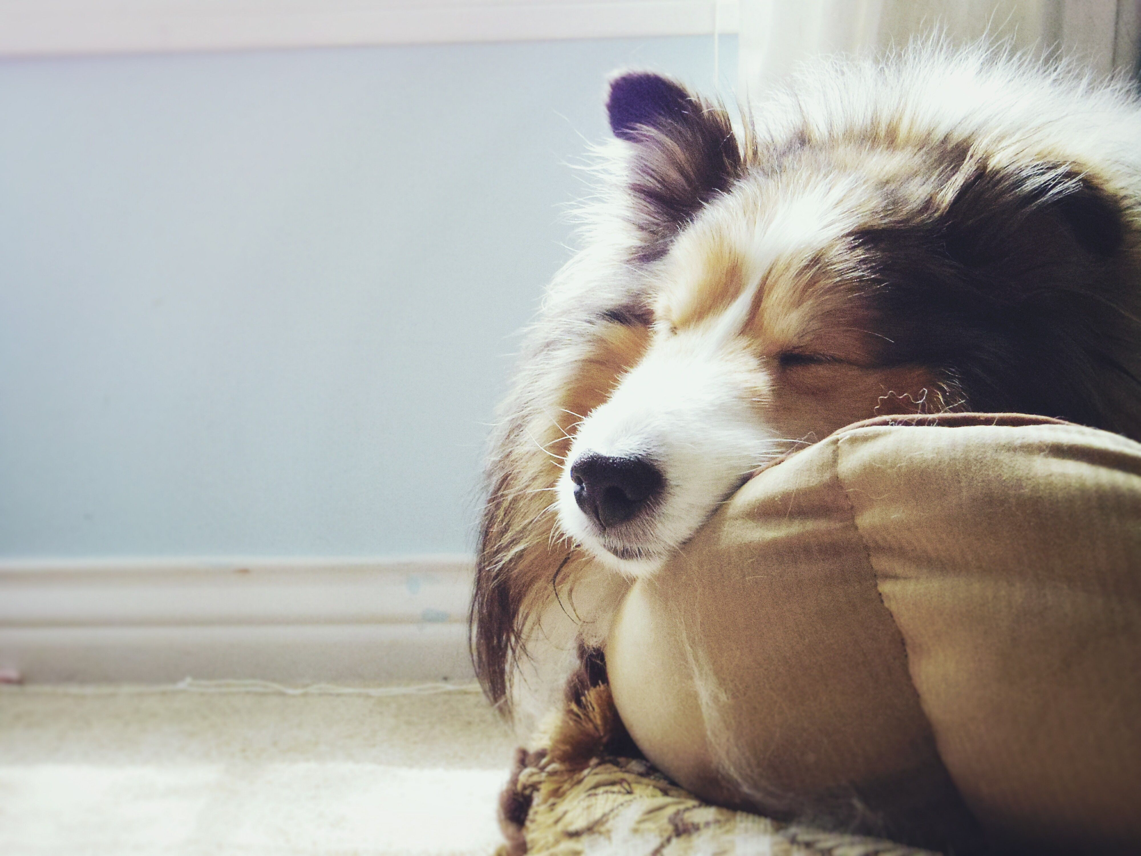 Picture of: The 9 Best Dog Beds Of 2020