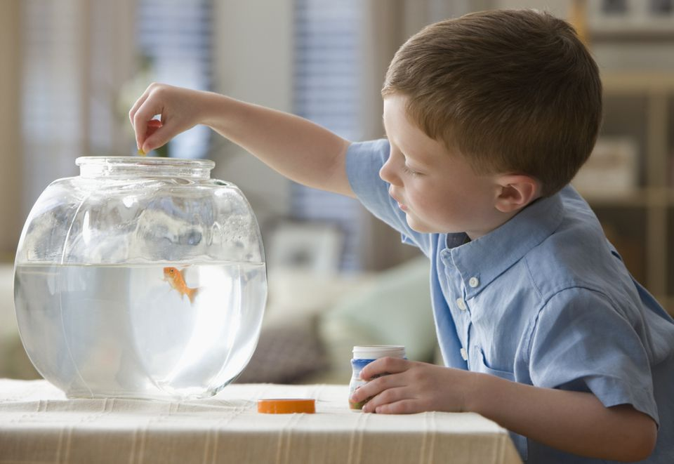 Caucasian boy feeding fish in fish bowl