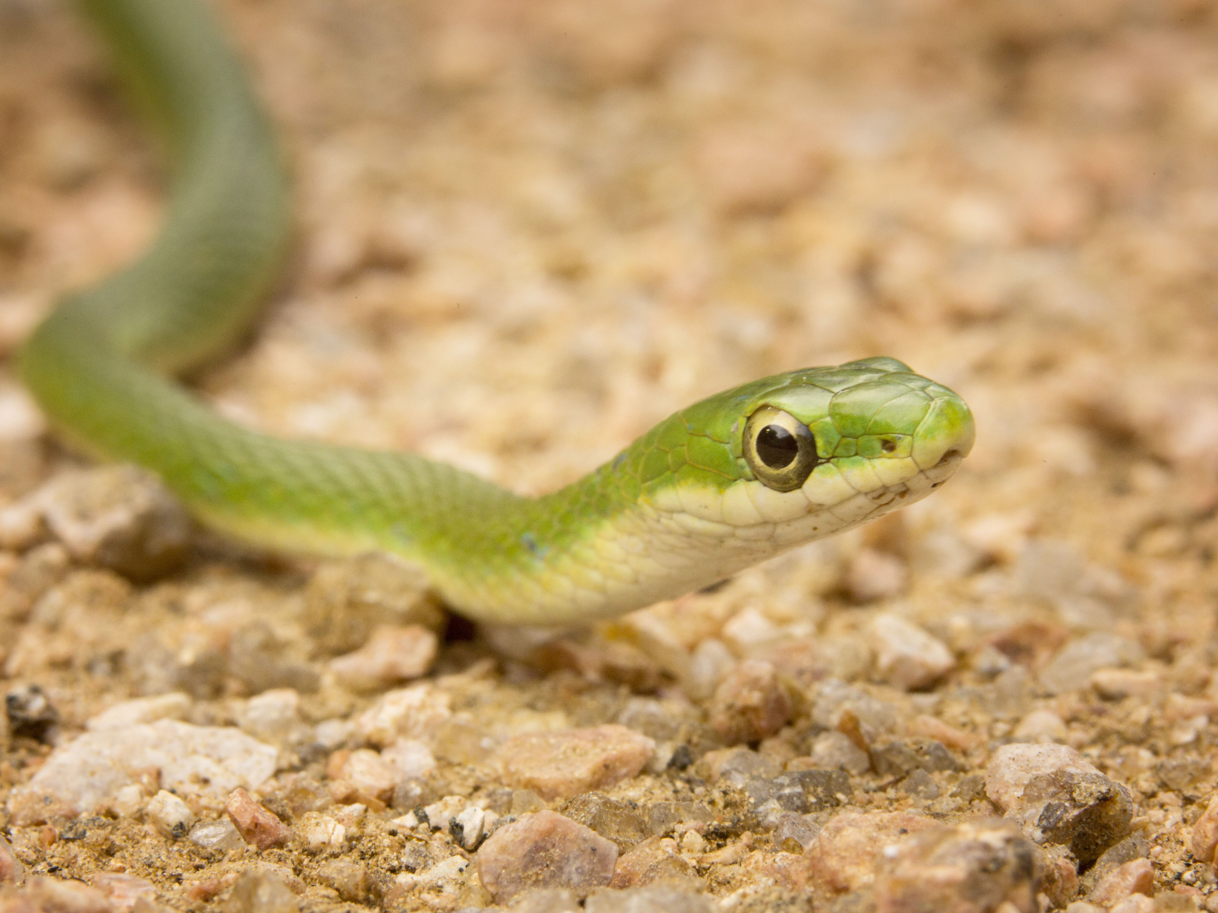 43 Names for Pet Snakes