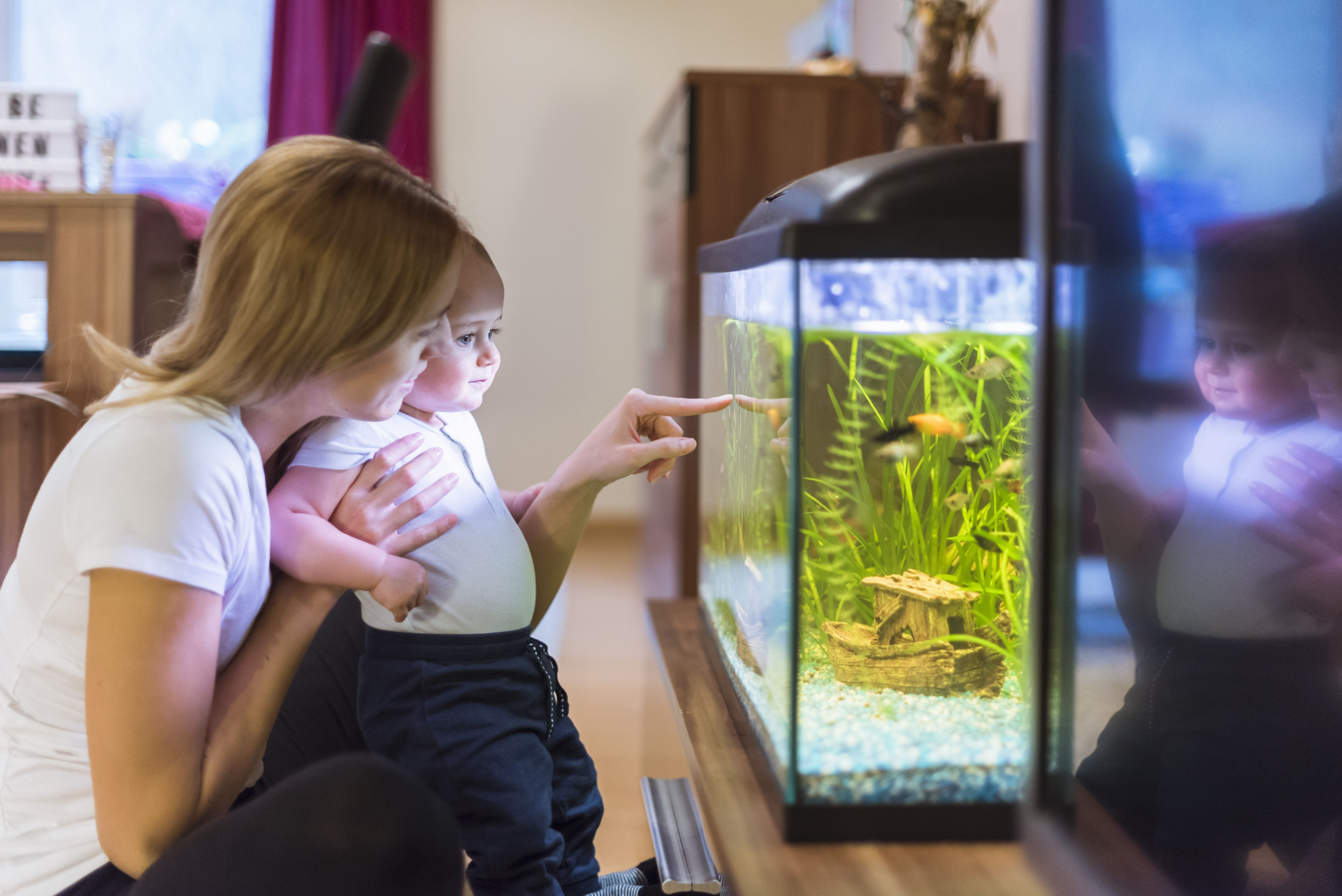 The 10 Best Aquarium Water Test Kits Of 2020