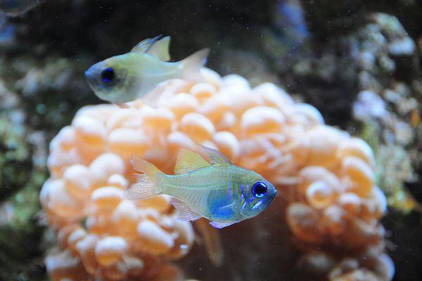Tropical fish tank aquarium