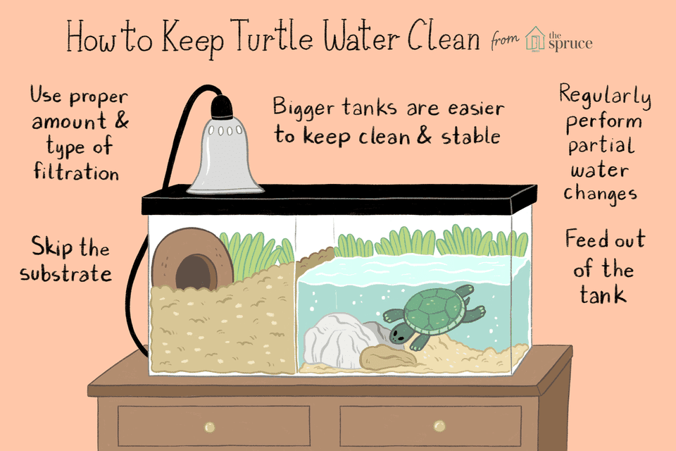 illustration of how to keep turtle water and tanks clean