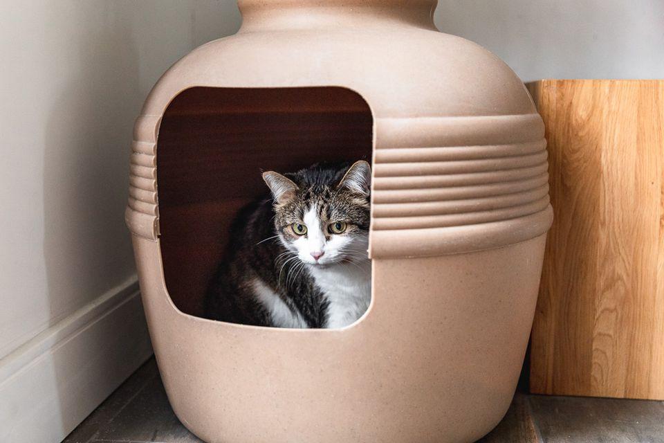 cat in its litter box