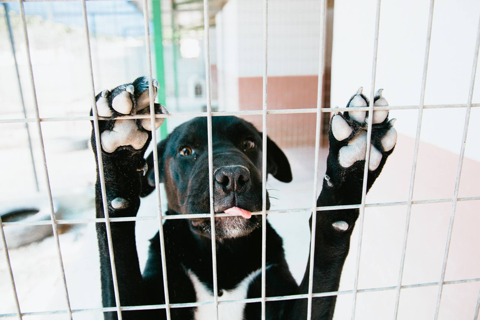 Close-up of black dog in cage