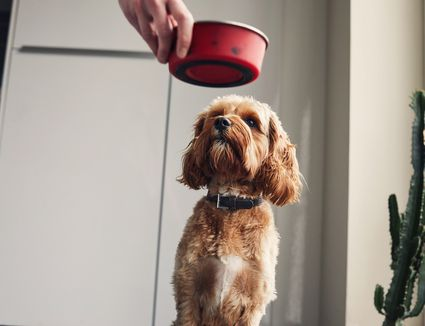 how many calories to feed a dog per day