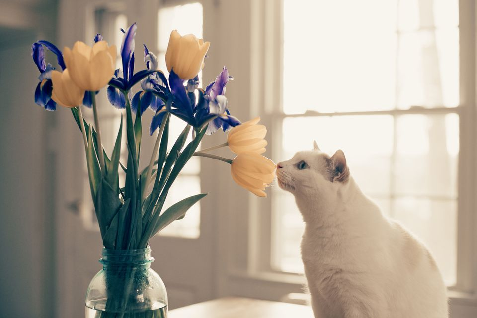 White cat smelling a bouquet of flowers