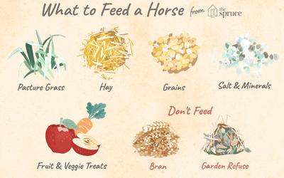 Horse Nutrition & Diet Tips