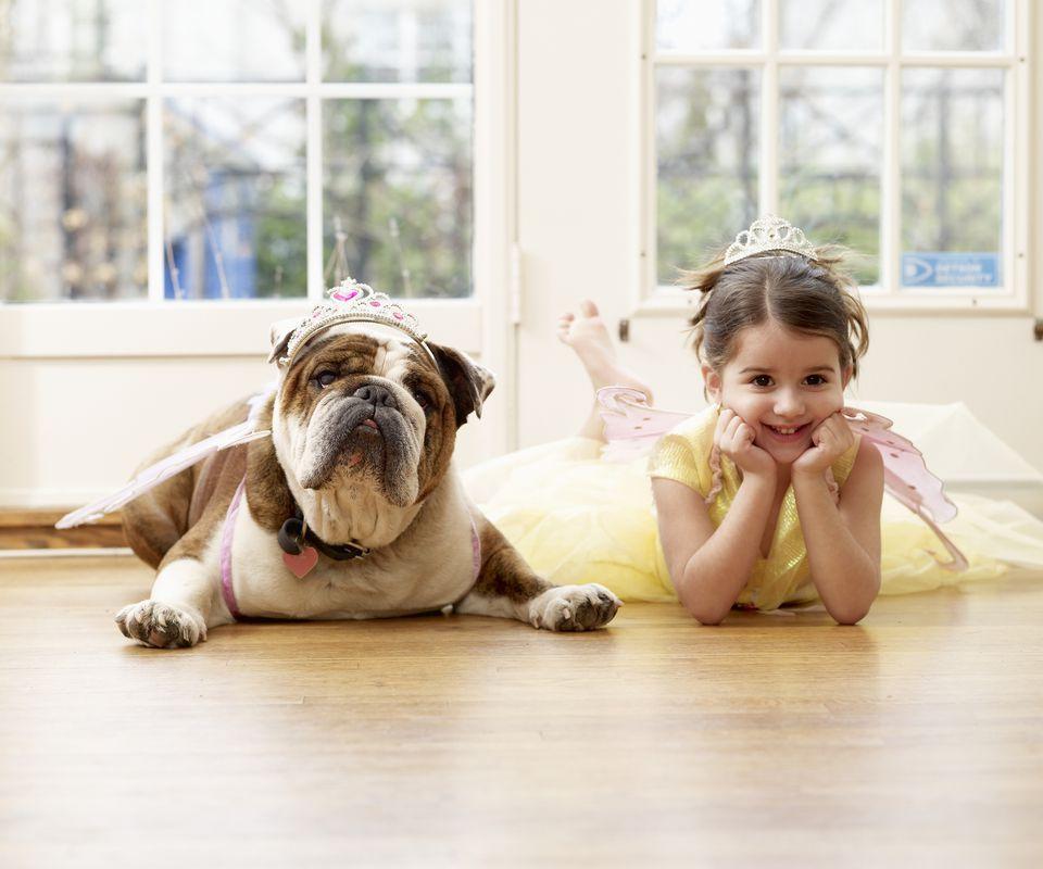 Bulldog and girl both lying on a house floor