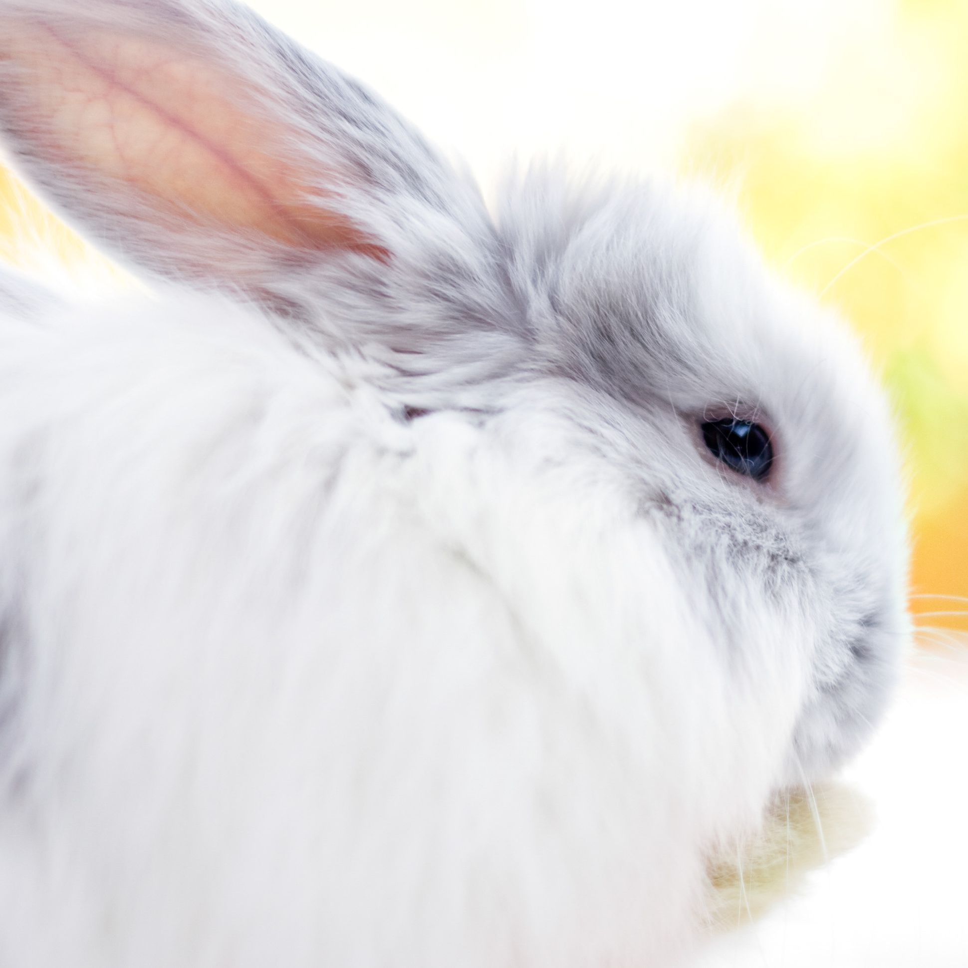 47 Rabbit Breeds To Keep As Pets