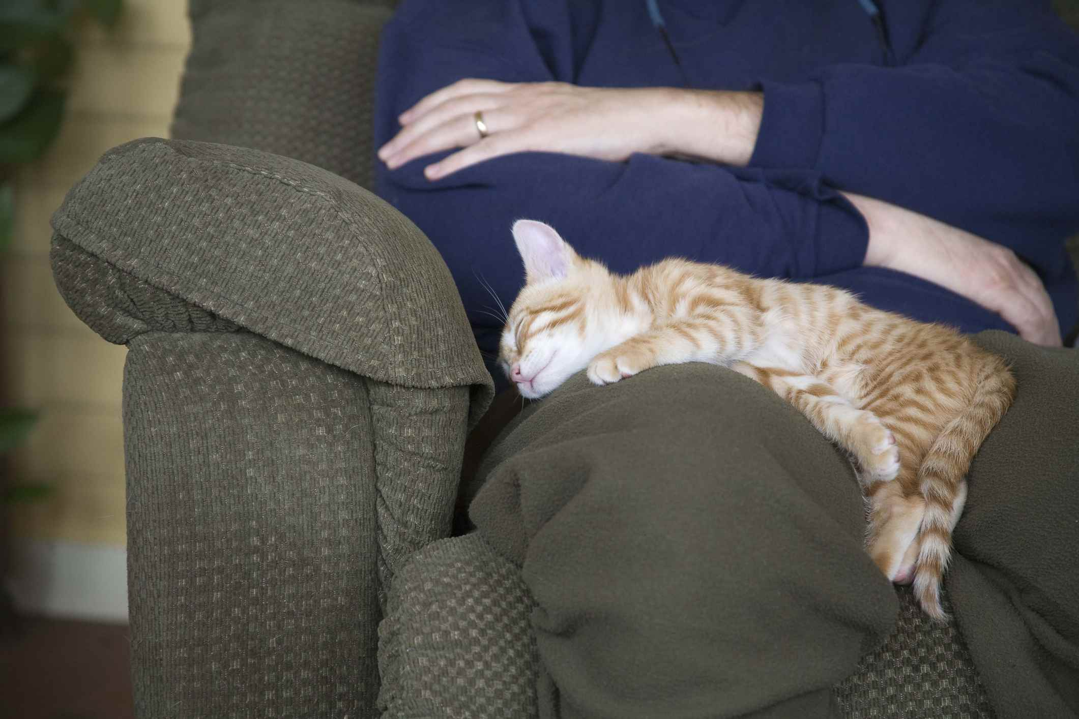 Cat sleeping in owner's lap