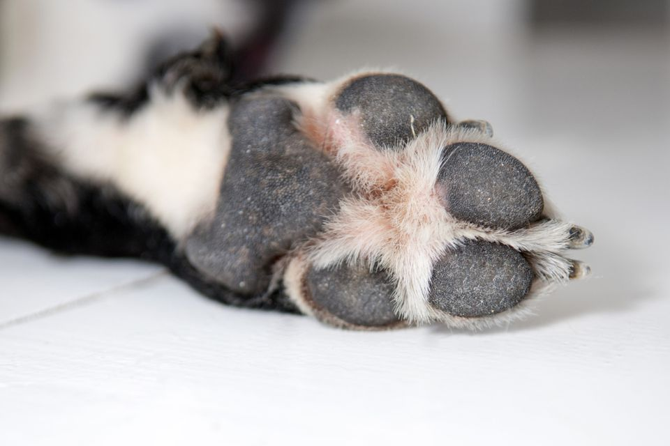 bottom of dogs paw