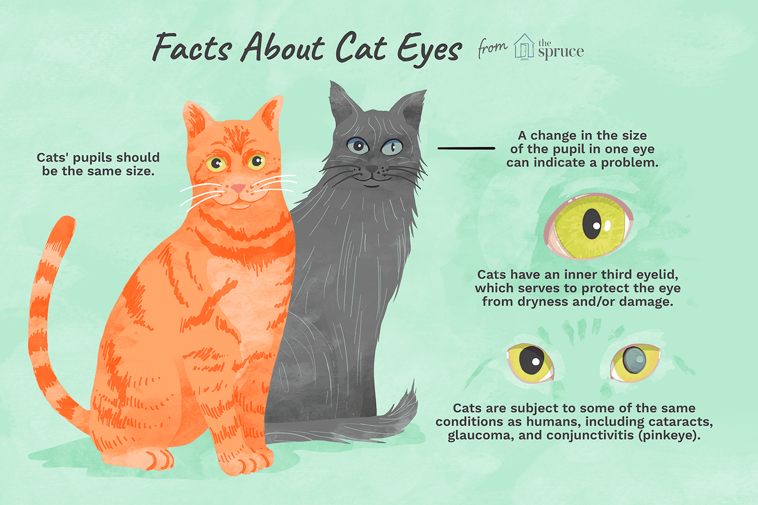 illustration of facts about cat eyes