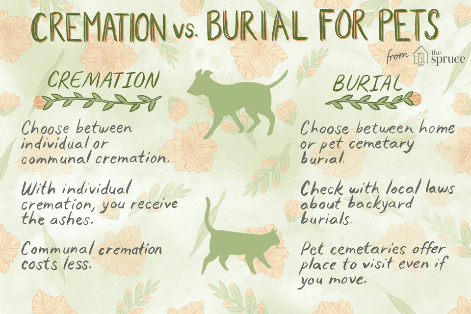 options for pet aftercare: cremation vs. burial