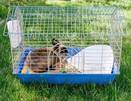 Brown rabbit in cage with water bottle and white litter box on grass lawn