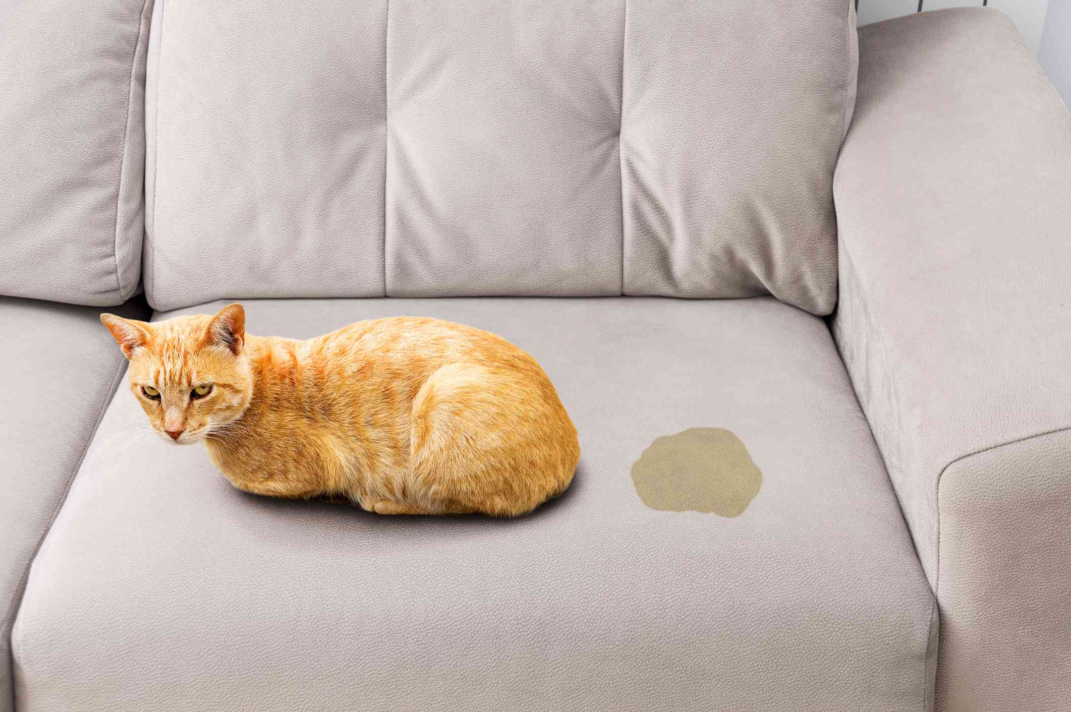 Cat peeing on couch