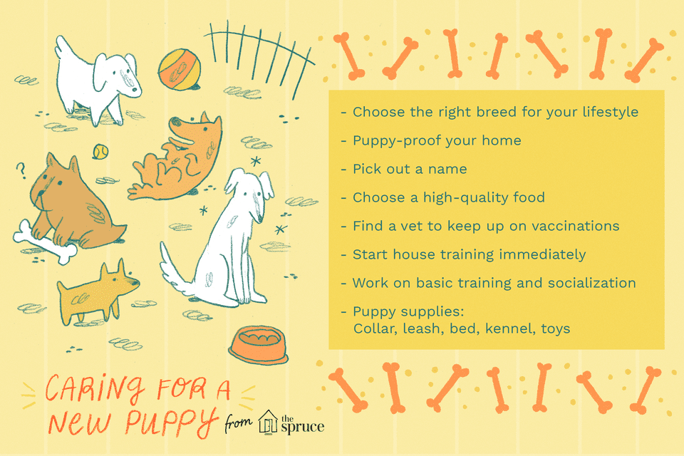 illustration of caring for a new puppy