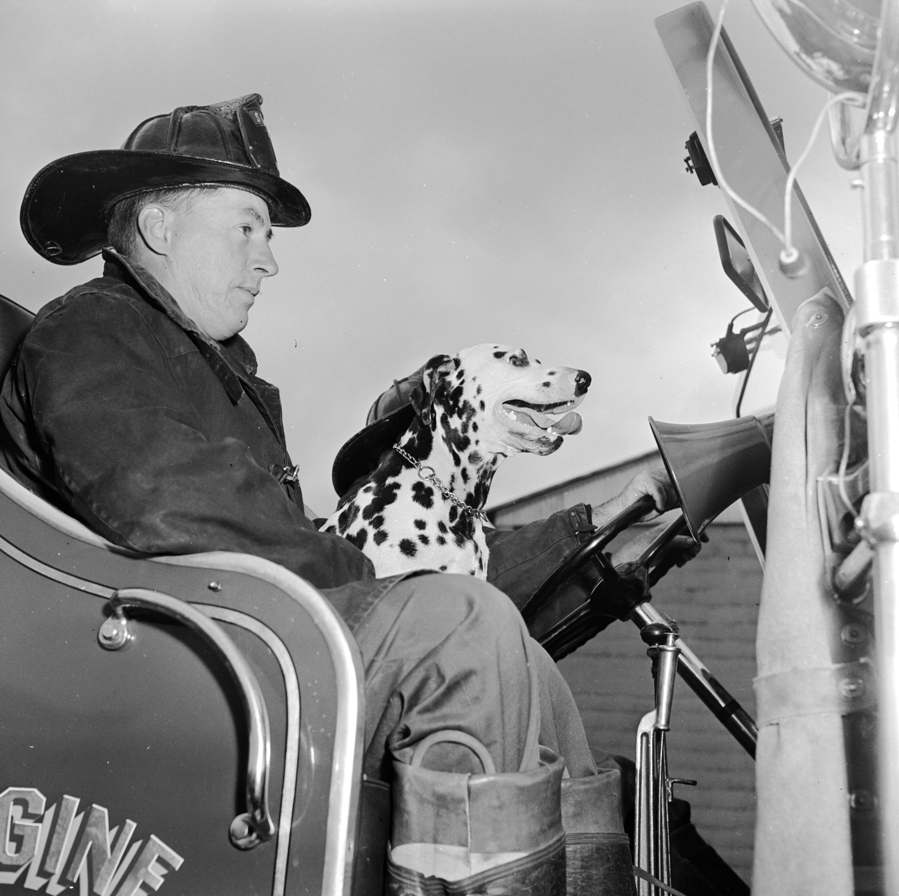 Spanner the dalmatian fire dog at the South Portland Fire Department, Cash Corner Station in the USA.