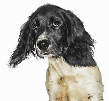 Seizures in Dogs: Types and Clinical Signs