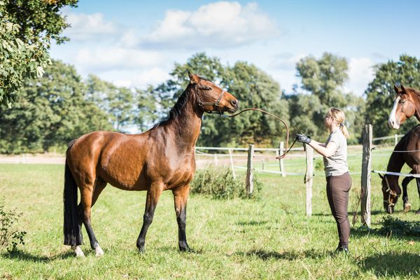 Gelding horse with owner