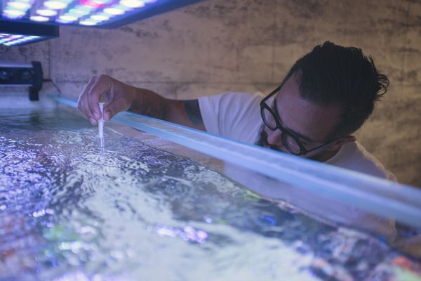 Reef Tank Water Testing