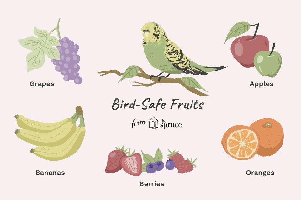 Ilustración de alimentos inocuos para las aves