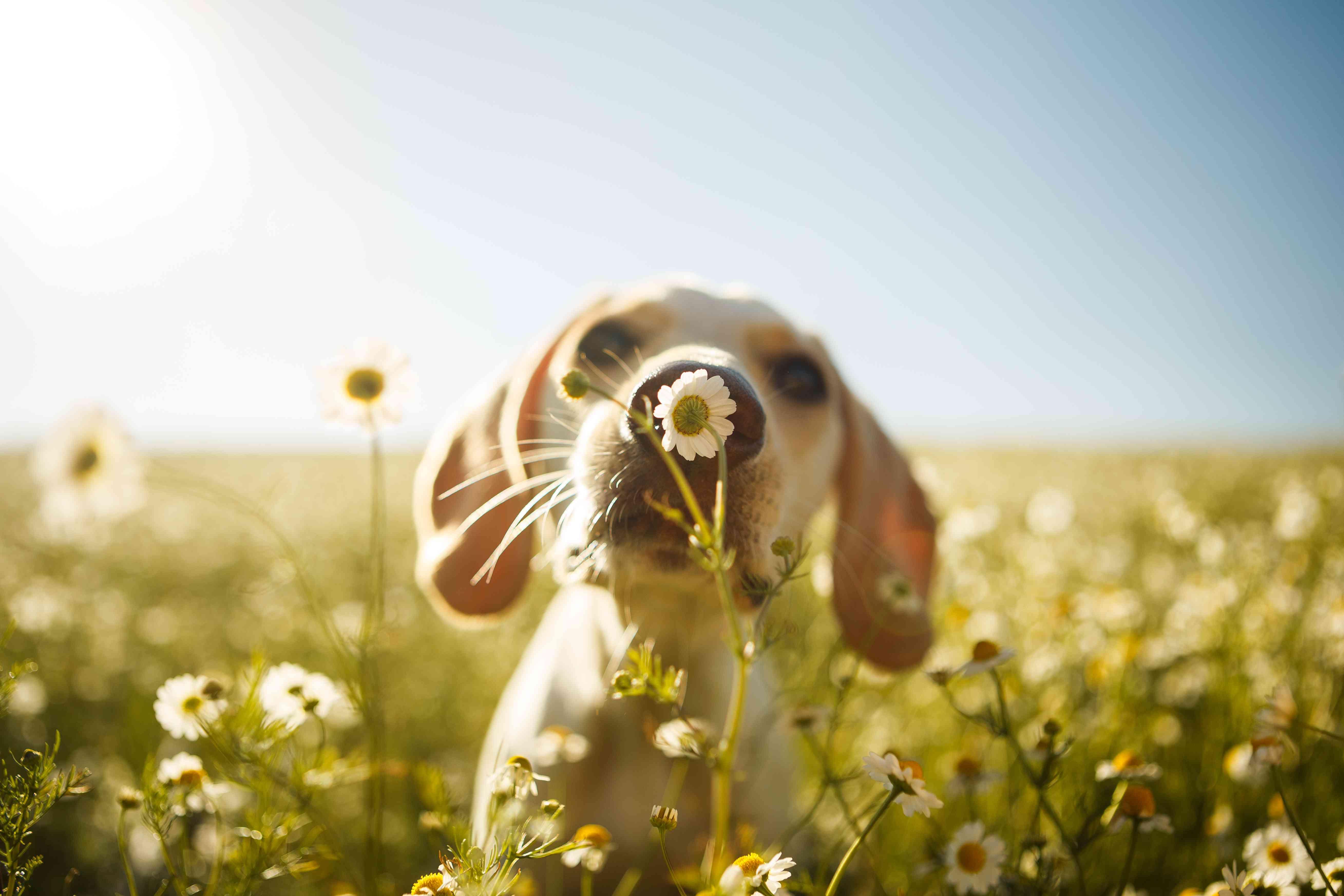 Joven cachorro en campo de flores con cielo azul