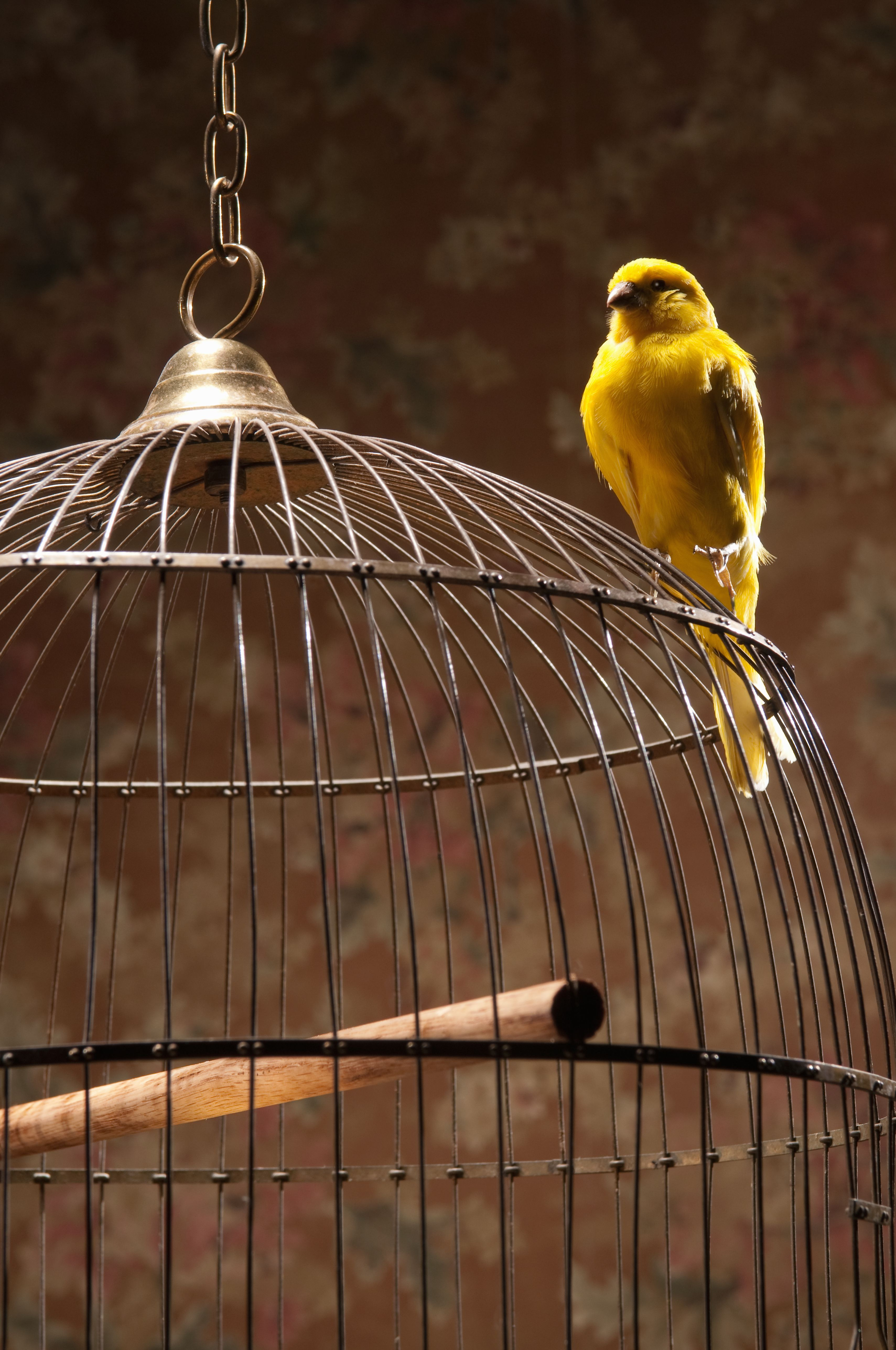 Know the Risks Before You DIY a Bird Cage