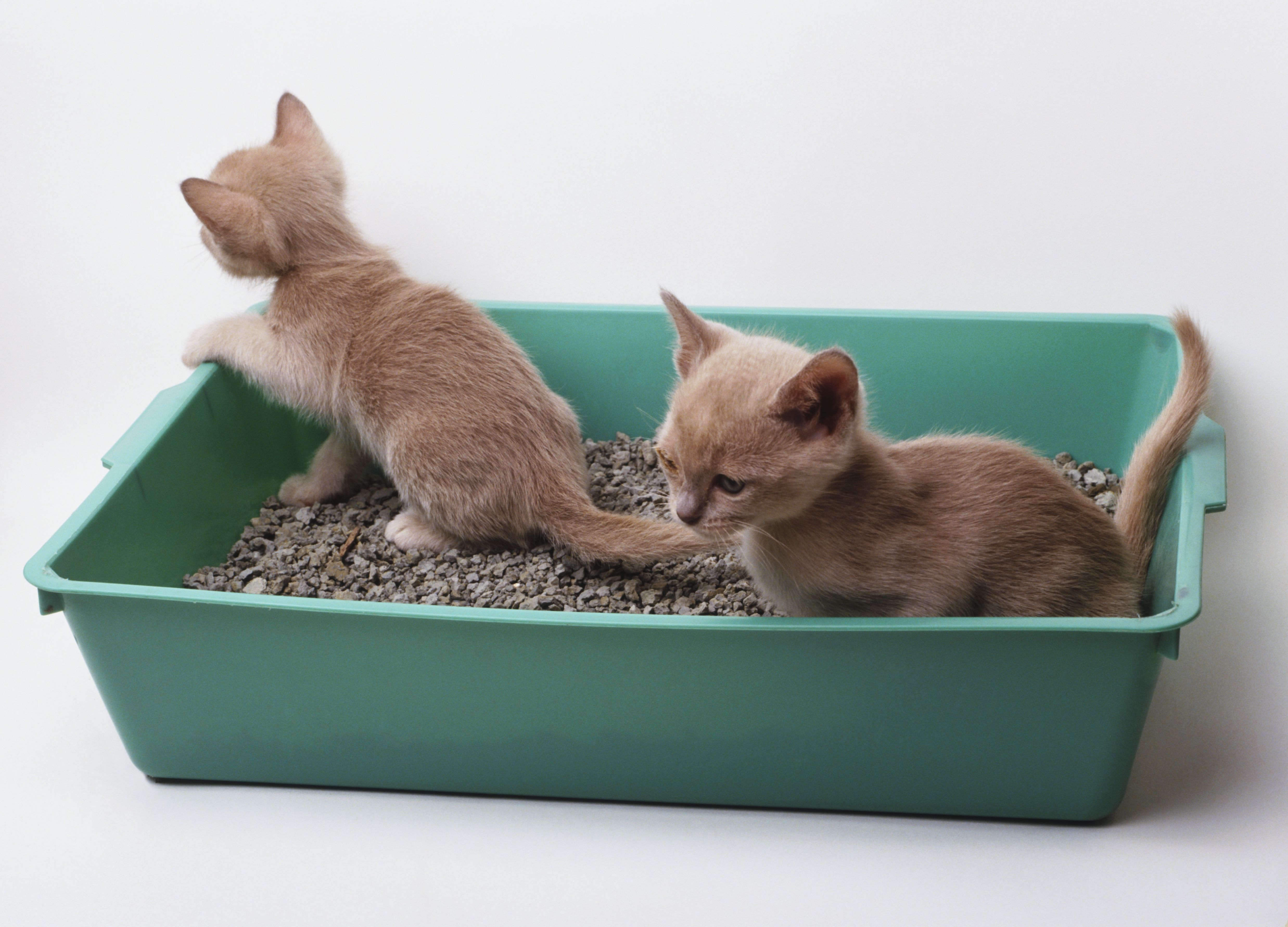 8 Reasons Two Kittens Are Better Than e