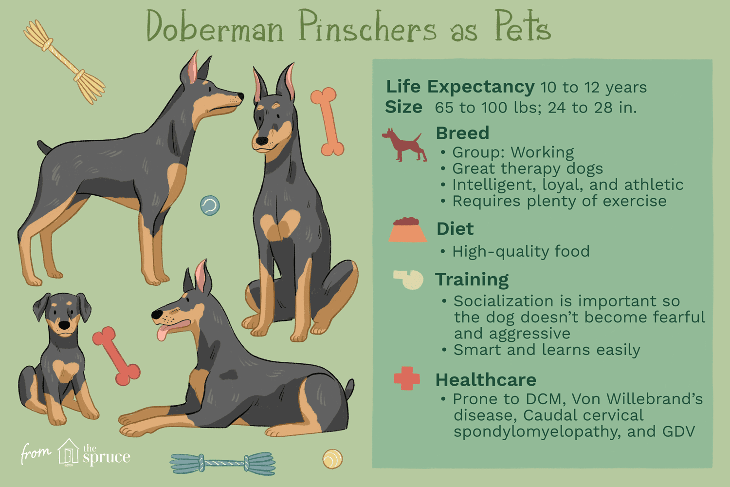 Doberman Pinscher Dobie Full Profile History And Care