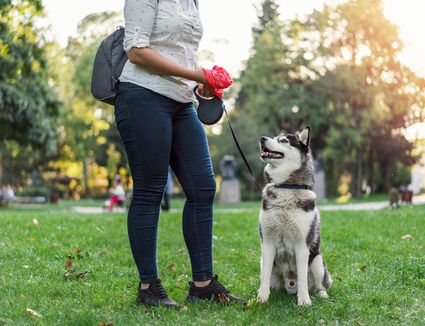 Neck down shot of woman in park with her husky dog after she has picked up poop in a baggie.