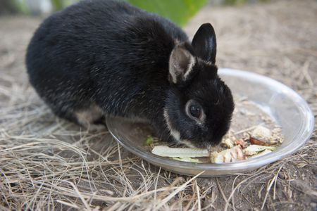 What to Do If Your Pet Rabbit Stops Eating