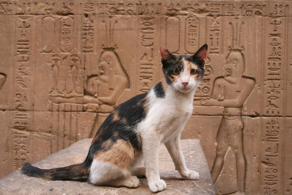 Cat in Egypt with hieroglyphs