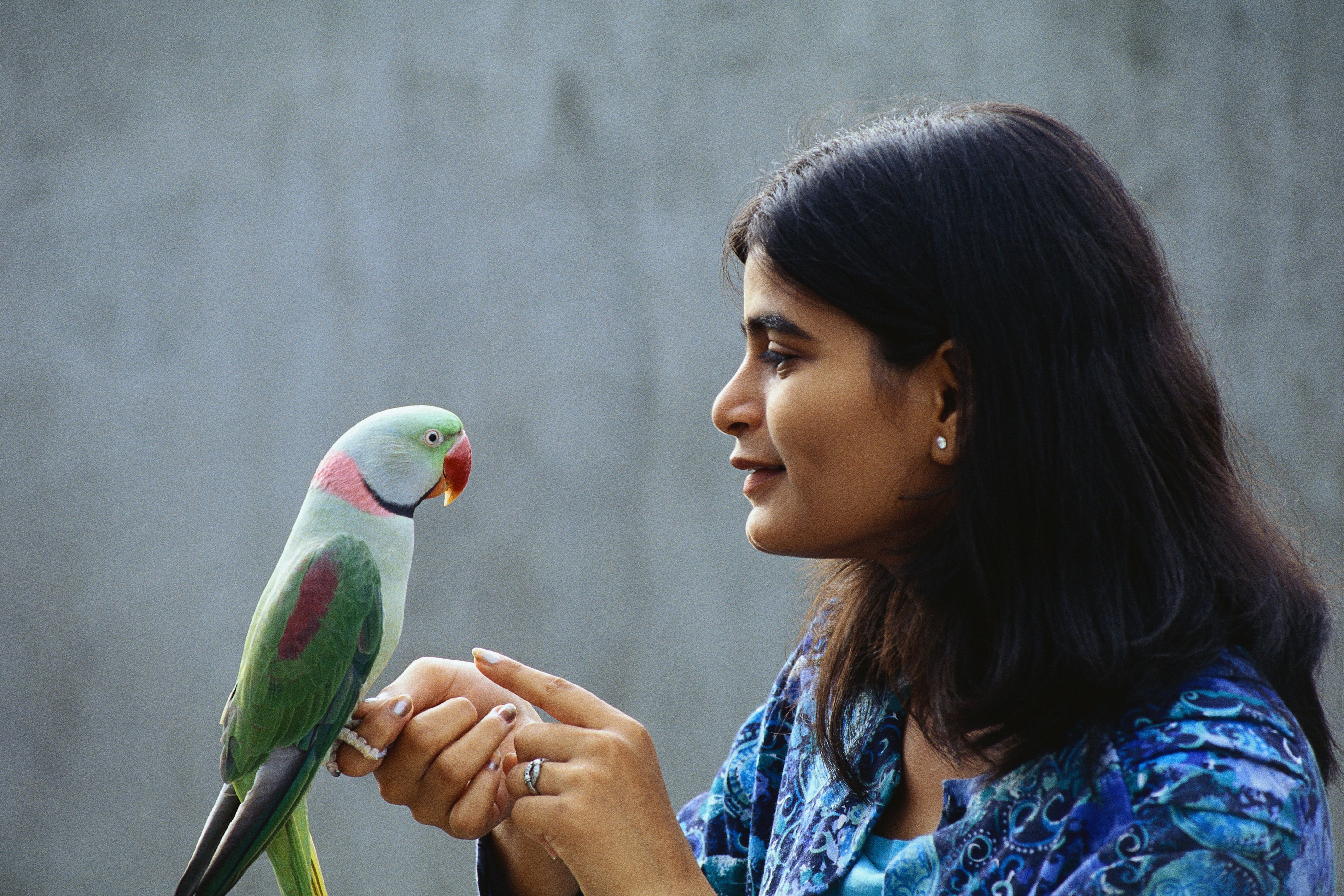 bonding with parrots by thevetscare.com