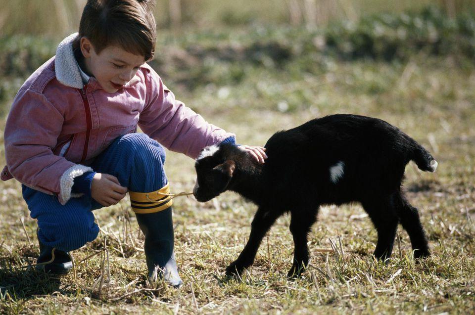 Niño (4-7) tocando cabra, al aire libre