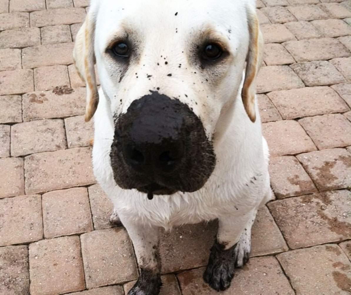 Dog with dirty nose and feet