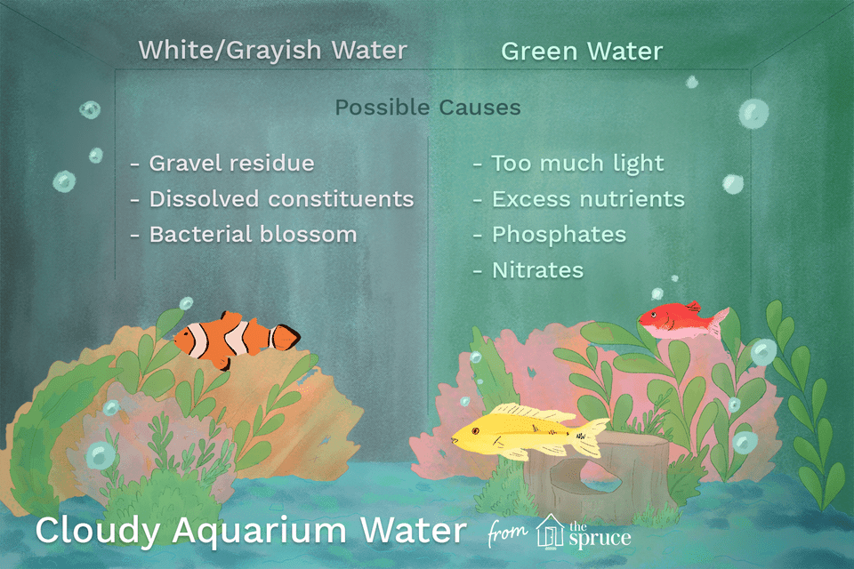 Illustration listing the cause of cloud water in aquarium